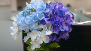 ブログ写真紫陽花